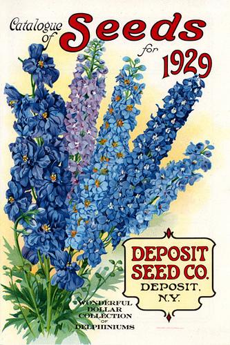 John Scheepers Kitchen Garden Seeds Seed Starting Timetables