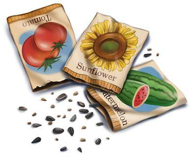 John Scheepers Kitchen Garden Seeds Seed Starting Timetables