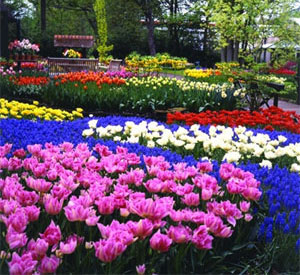 Now is the time to think about spring bulbs start mightylinksfo