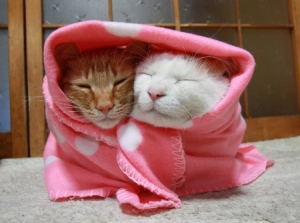 cat blanket2